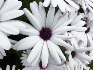 news article flower